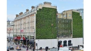 Londonski živi zid