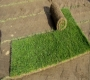 Travni tepih za vrtove i parkove